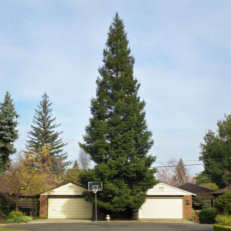 """From the series """"Property Line"""": """"Center Pine"""" Photo: Roberta Neidigh / ONLINE_CHECK"""