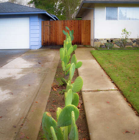 """From the series """"Property Line"""": """"Cactus"""" Photo: Roberta Neidigh / ONLINE_CHECK"""