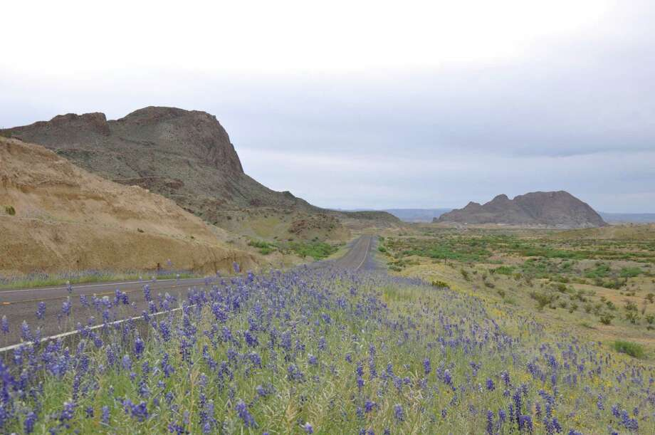 The desert is in bloom in Big Bend National Park. Photo: Melissa Aguilar, Houston Chronicle
