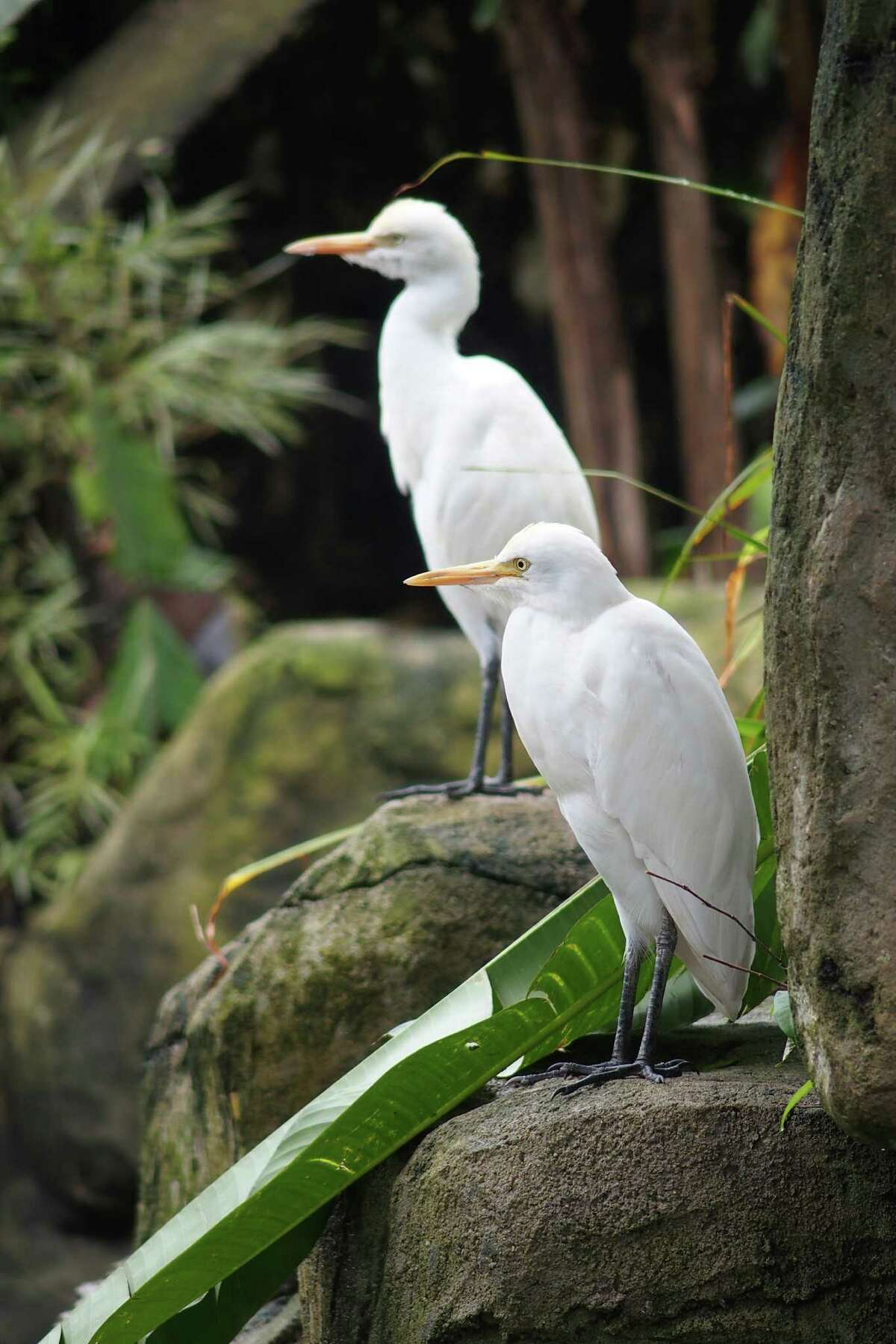Residents at K.L. Bird Park in Kuala Lumpur, said to be the largest free-flight walk-in aviary in the world.
