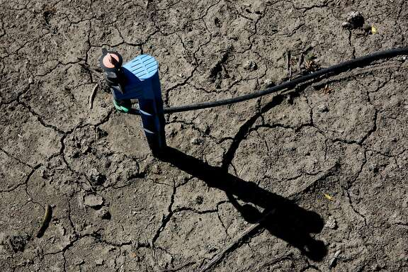 In this photo taken Friday March 27, 2015, low-flow water emitter sits on some of the dry, cracked ground of farmer Rudy Mussi's  almond orchard in the Sacramento-San Joaquin Delta near Stockton, Calif.  As California enters the fourth year of drought, huge amounts of water are mysteriously vanishing from the Sacramento-San Joaquin Delta, and farmers whose families for generations have tilled fertile soil there are the prime suspects.  Delta farmers deny they are stealing water, still, they have been asked to report how much water they're pumping and to prove their legal right. Mussi says he has senior water rights in a system more than a century old that puts him in line ahead of those with lower ranking, or junior, water rights.(AP Photo/Rich Pedroncelli)