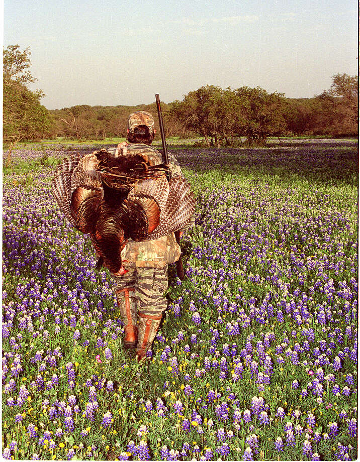 The chance to wander across a landscape bursting with color and life is one of the rewards Texas turkey hunters enjoy during the spring season. Photo: SHANNON TOMPKINS, STAFF / HOUSTON CHRONICLE