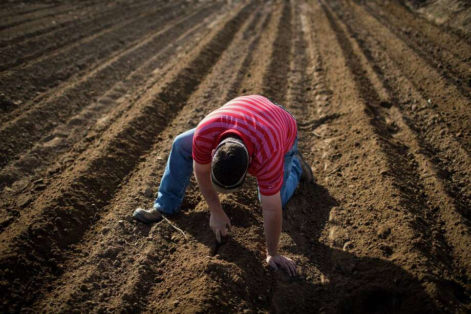 Bobby Skov, a farmer who relies on groundwater until he receives his surface water allotment, checks the depth of cotton seeds in Fabens, Texas. The West is under siege by changing weather patterns that have shrunk snowpacks.  Photo: MAX WHITTAKER, STR / NYTNS