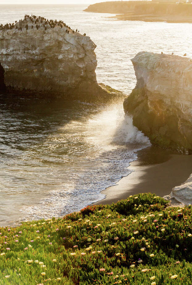 The bluff above Natural Bridges State Beach is a popular spot to catch the sunset for animals and humans alike. Photo: Jason Henry / Special To The Chronicle / ONLINE_YES