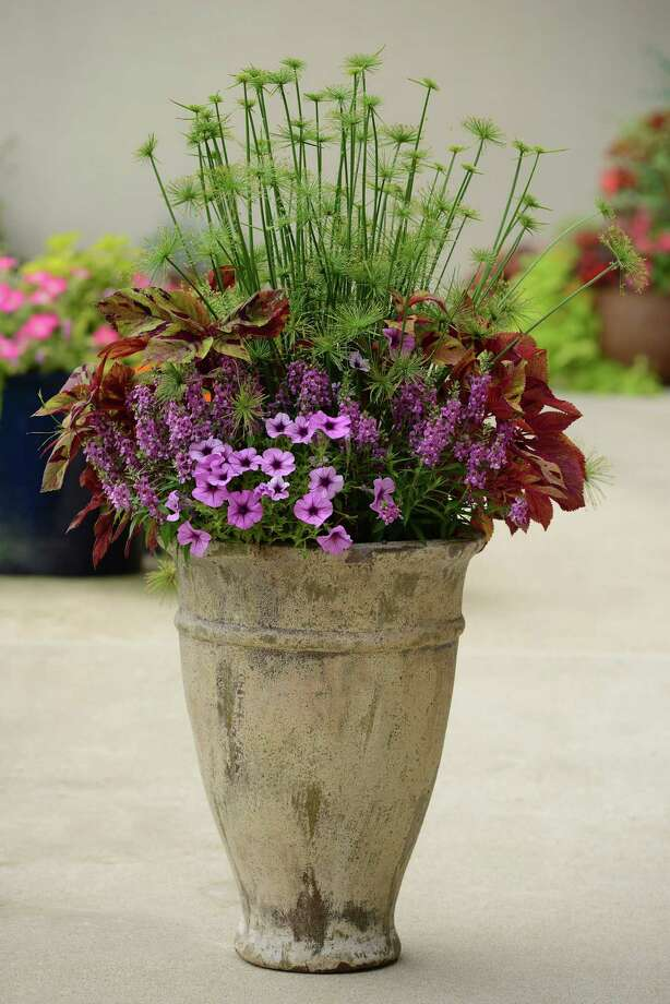 Plants can add color to the front of a house. Photo: Ball Horticultural Co., HO / Chicago Tribune
