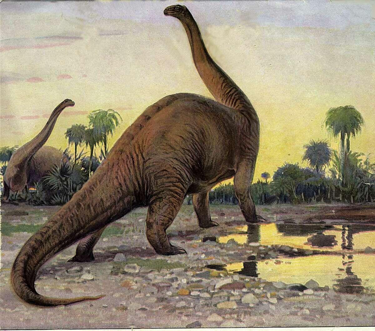 Drawing of the late Jurassic dinosaur, the Brontosaurus.