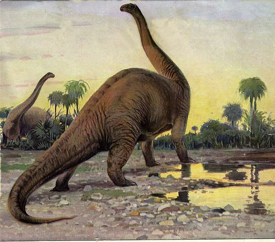 Drawing of the late Jurassic dinosaur, the Brontosaurus. Photo: Connecticut Post Contributed / Connecticut Post contributed