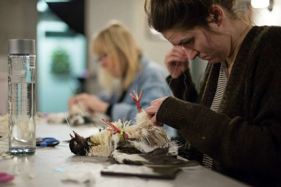 Jackie Mock works on a pigeon during a taxidermy class at the Morbid Anatomy Museum in New York. Preserving dead animals is a popular subject at the Brooklyn museum, especially for women, artists and nature lovers. Photo: Kevin Hagen /New York Times / NYTNS