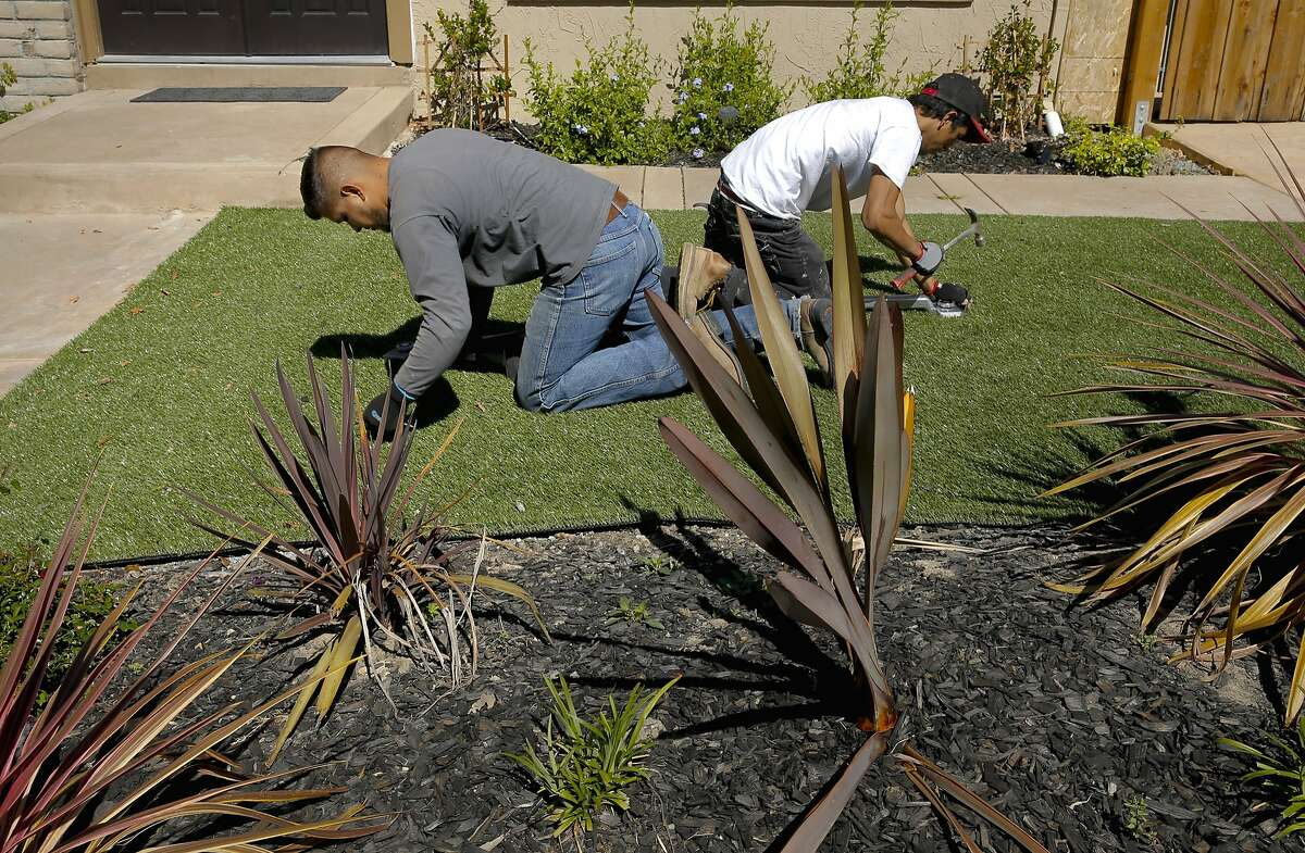 Giovanny Perez, (left) and Willie Hernandez with Diamond Greens, secure the roll with nails during the installation of an artificial lawn at a home in Walnut Creek, Calif., on Wed. April 15, 2015. With the current fourth year of drought throughout the state of California the artificial grass business is booming.