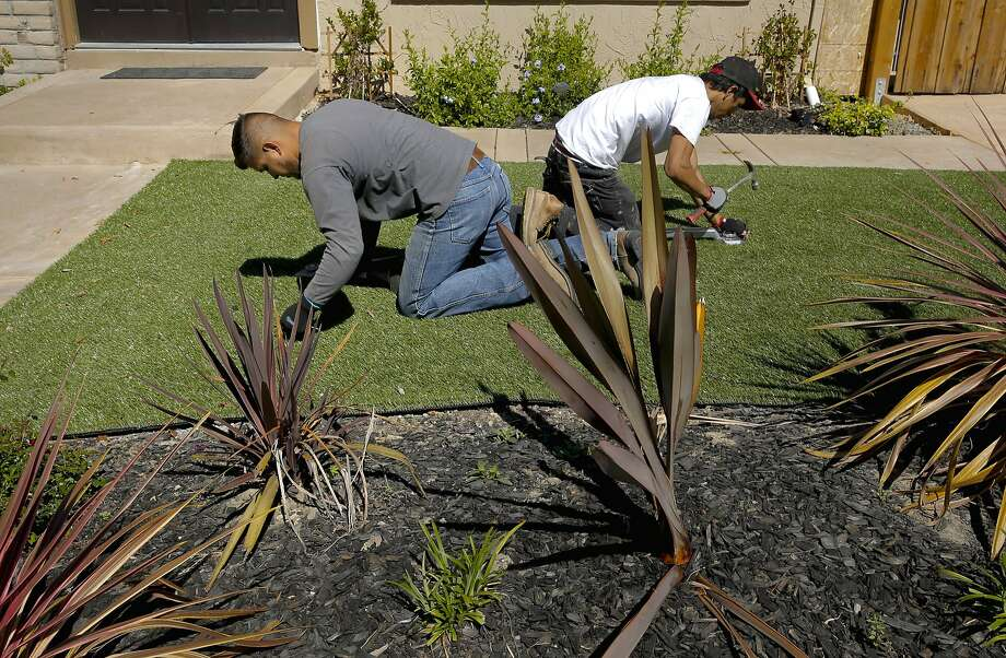 Giovanny Perez, (left) and Willie Hernandez with Diamond Greens, secure the roll with nails during the installation of an artificial lawn at a home in Walnut Creek, Calif., on Wed. April 15, 2015. With the current fourth year of drought throughout the state of California the artificial grass business is booming. Photo: Michael Macor, The Chronicle
