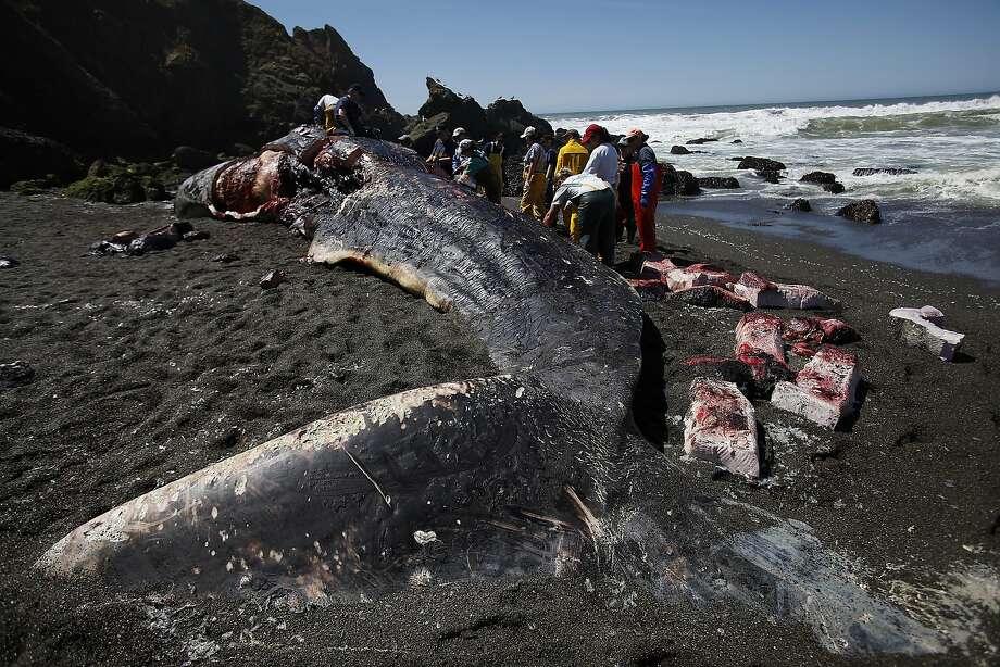 mortality coast florida whale Sperm gulf