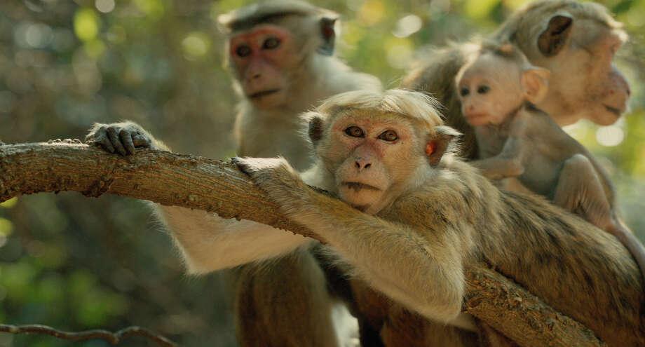 Disneynature's Monkey Kingdom  Maya and Kip   Ph: Film Frame  ©Disneynature 2015