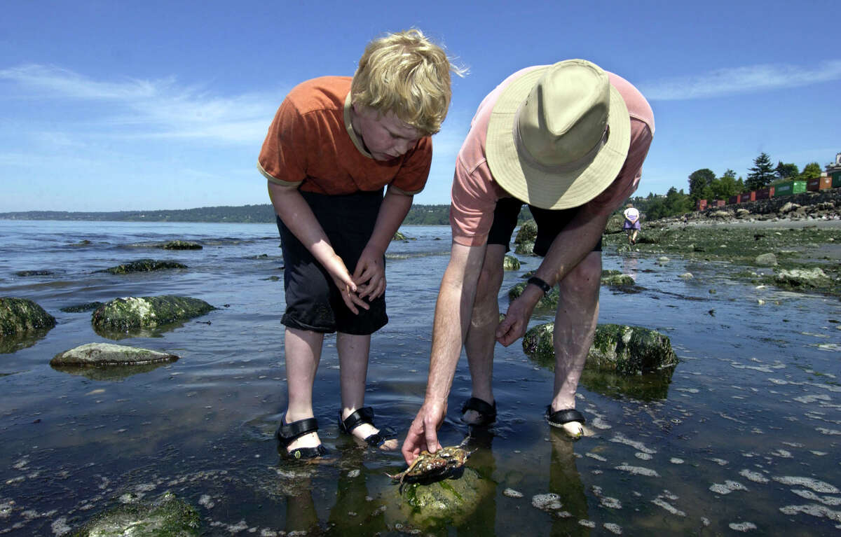 Larry Halvorsen, right, shows his son, Liam Halvorsen, left, 10, a crab during a low tide at Golden Gardens State Park in Seattle, Friday, June 4, 2004. Puget Sound tides are at their lowest in 19 years.