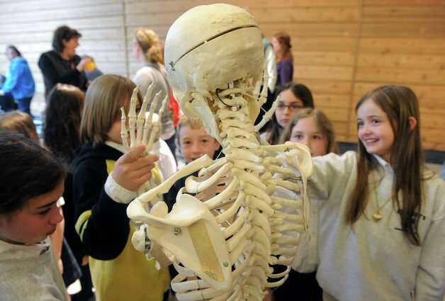 Students from St. Mary's School of Hoosick Falls examine a human skeleton during Journey Through The Body coordinated by clinicians from St. Peter's Health Partners at the Colonie Center on Friday April 167 2015 in Colonie, N.Y. (Michael P. Farrell/Times Union) Photo: Michael P. Farrell / 00031458A