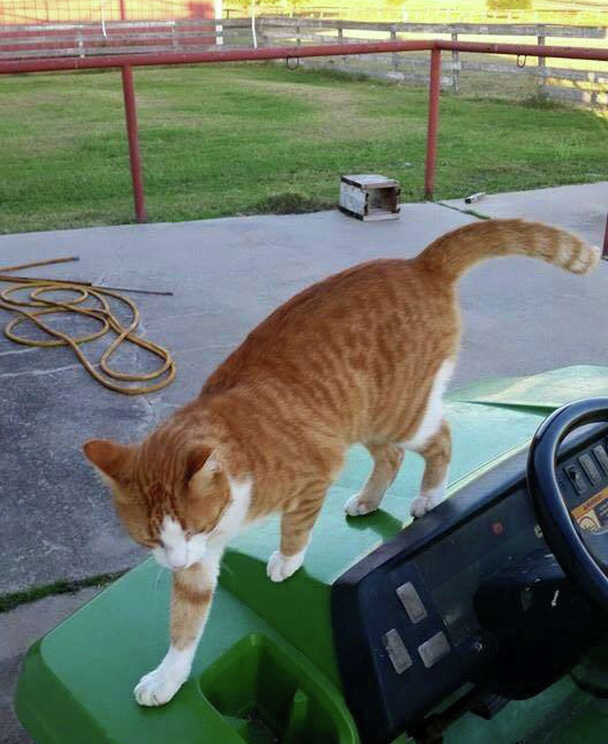 Representatives with True Blue Animal Rescue in Brenham now say that the cat was in fact not feral but a foster cat that was owned by the group. (Source: Facebook)