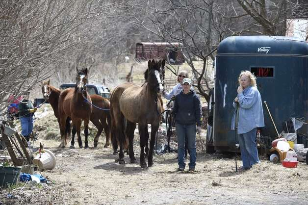 Animal care workers prepare to remove horses from a home on Wilton Road in Greenfield Friday after a judge ruled that they could be seized. (Skip Dickstein / Times Union)