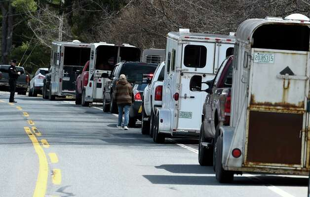 Horse trailers are lined up to remove 13 endangered horses from the property at 131 Wilton Road in Greenfield, N.Y.     (Skip Dickstein/Times Union) Photo: SKIP DICKSTEIN / 00031499A