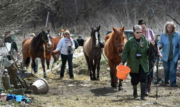 Members of the SPCA and volunteers round up 13 endangered horses from the property at 131 Wilton Road in Greenfield, N.Y.     (Skip Dickstein/Times Union) Photo: SKIP DICKSTEIN / 00031499A
