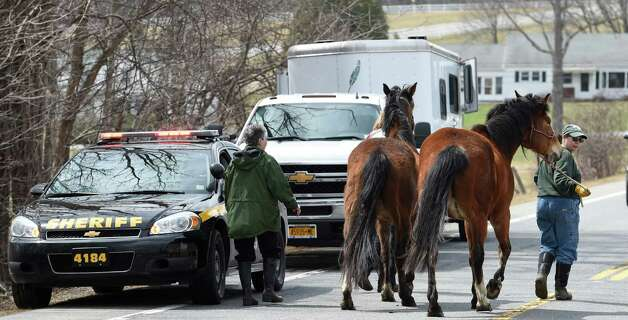 Members of the SPCA and volunteers round up two of the 13 endangered horses from the property at 131 Wilton Road in Greenfield, N.Y.     (Skip Dickstein/Times Union) Photo: SKIP DICKSTEIN / 00031499A