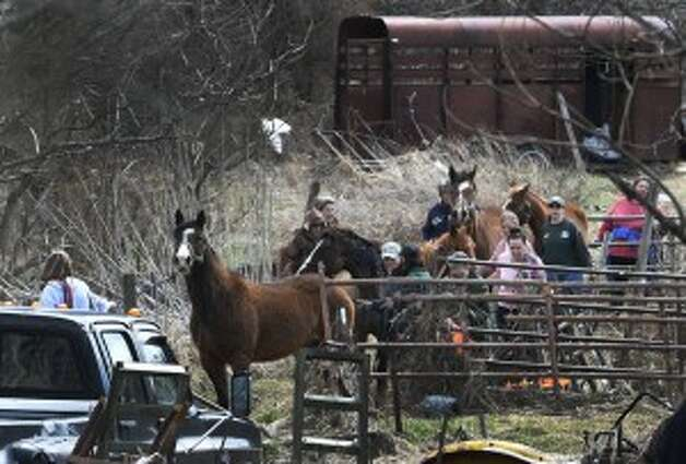 Members of the SPCA and volunteers round up 13 endangered horses from the property at 131 Wilton Road in Greenfield, N.Y. (Skip Dickstein/Times Union)