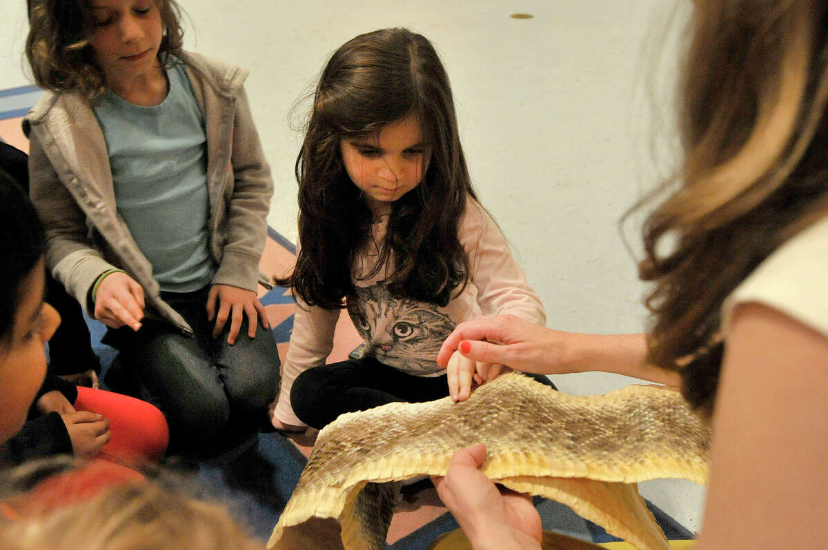 Kindergartener Brooke Nash touches a rattlesnake hide during a ROSCCO after-school program featuring a visit from representatives from the Bruce Museum teaching desert ecology at Newfield Elementary School in Stamford, Conn., on Tuesday, April 7, 2015.