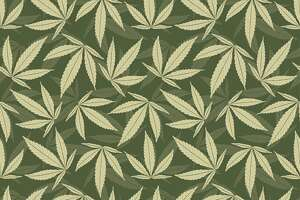 marijuana leaves marijuana leaves in one pattern