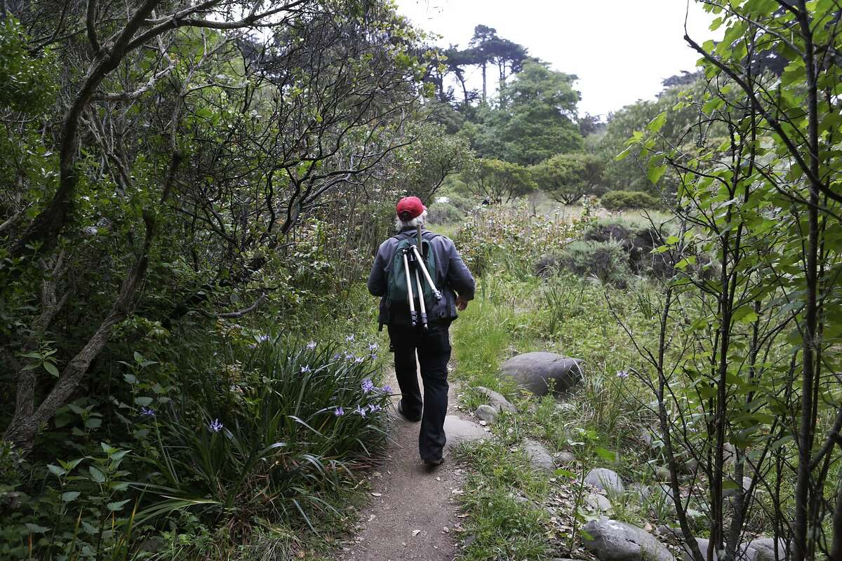Expert birder and San Francisco resident Alan Hopkins (63) pursues an unusual, small white bird through Golden Gate Park in San Francisco on Sunday, April 19, 2015. Early Sunday morning, Hopkins embarked from his home on a day-long walk to find birds of 100 different species as part of the Audubon Society's annual Birdathon fundraiser.
