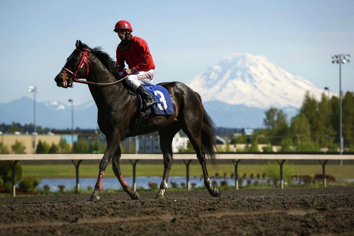 A horse and jockey come back in after a race during the opening day of the 20th Emerald Downs racing season on Saturday, April 18, 2015. The local racing season kicked off at the track in Auburn with a crystal clear view of Mount Rainier as a backdrop.
