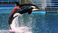Texas resident sues SeaWorld in S.A. federal court - Photo