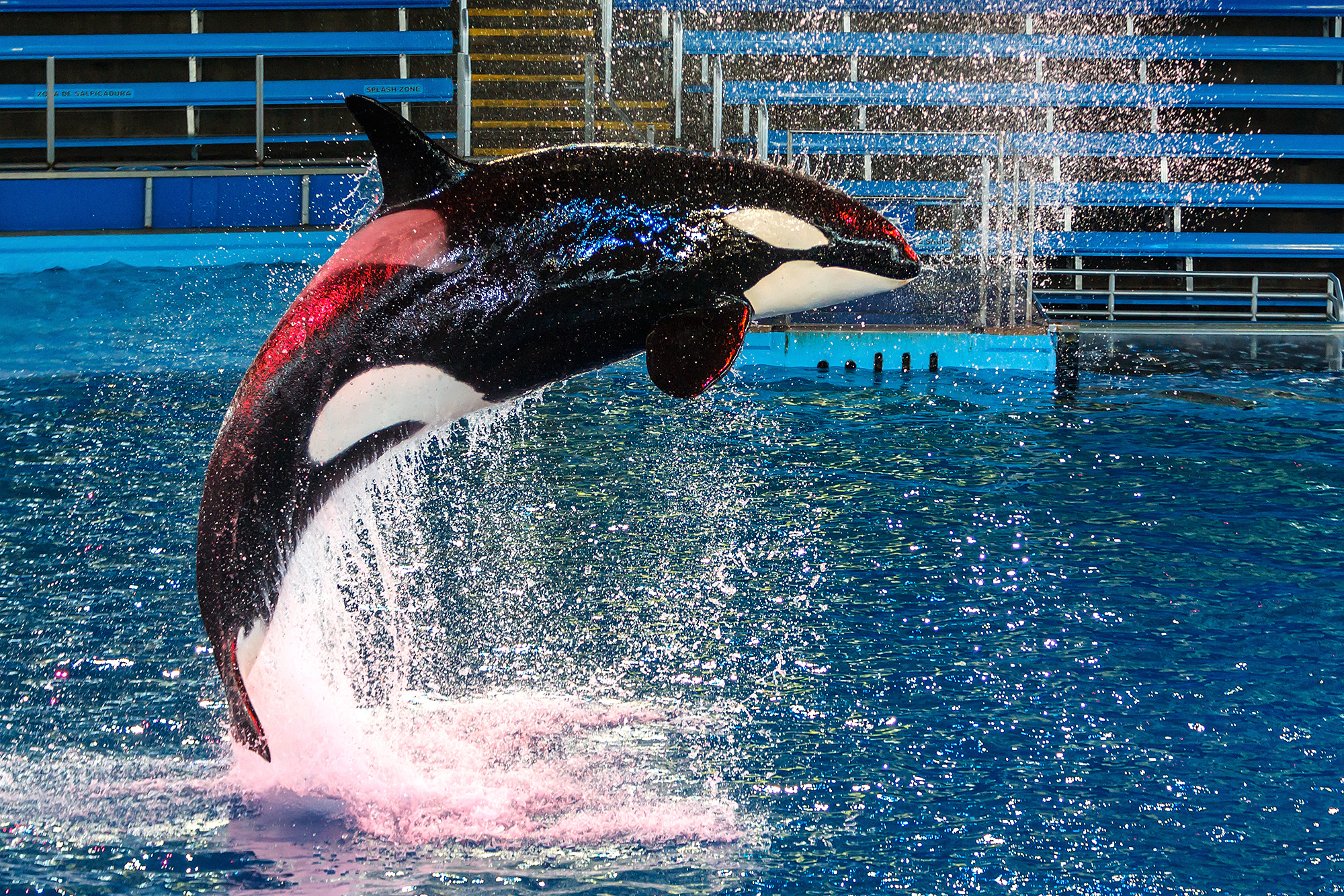 Texas Resident Sues Seaworld In S A Federal Court San