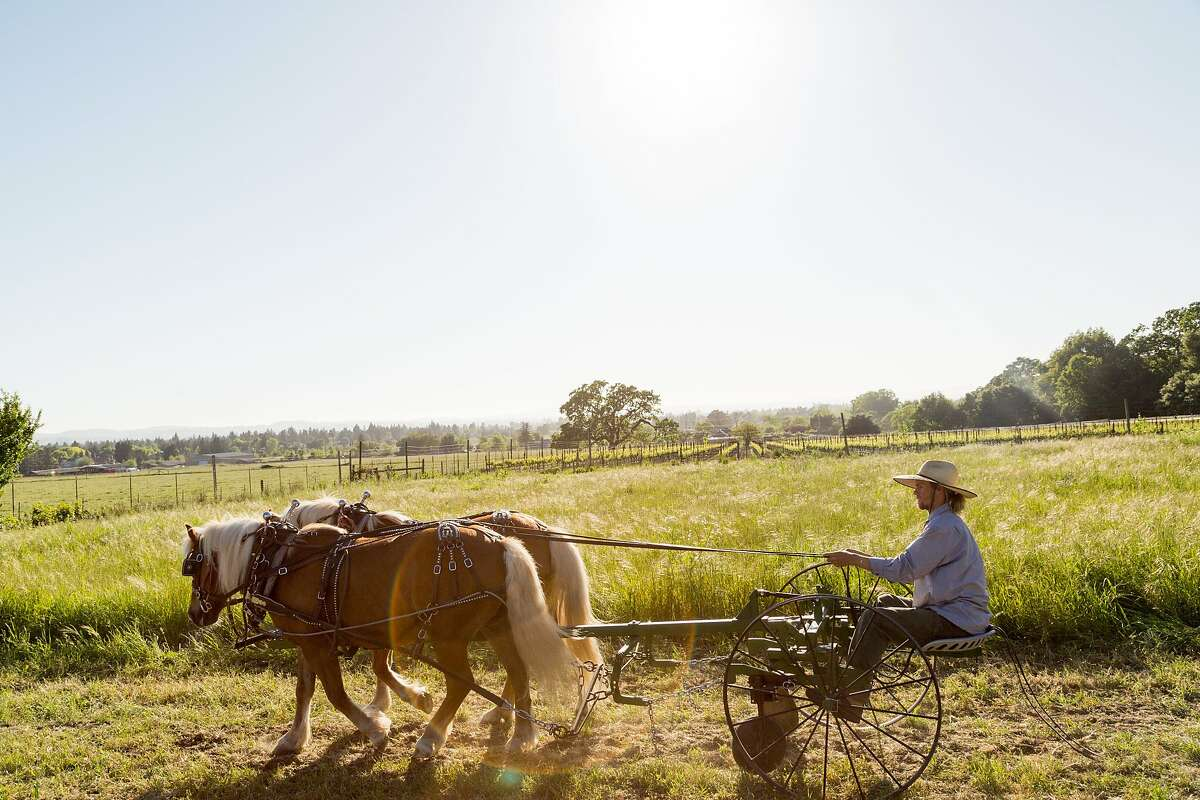 Farmer Balyn Rose plows a piece of land with Austrian Haflinger horses Mark and Chip at the Work Horse Organic Agriculture farm in Bennett Valley, Calif., Friday, April 17, 2015.