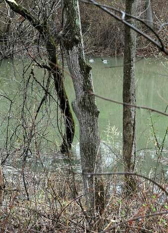 Trees are seen partially submerged as the Normans Kill water rises along Normanside Drive due to a mudslide on Monday, April 20, 2015 in Slingerlands, N.Y. (Lori Van Buren / Times Union) Photo: Lori Van Buren