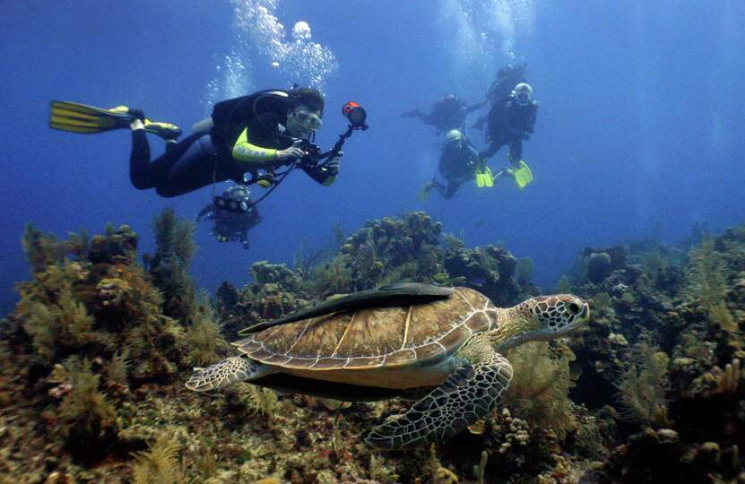 3 roatan honduras from zip lining to deep sea fishing to for Deep sea fishing seattle