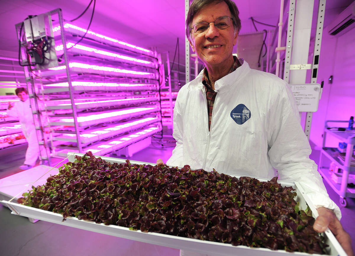 Steve Domyan, of Norwalk, holds a tray of hydroponic red leaf lettuce grown under red and blue ultraviolet LED lighting at Metrocrops in Bridgeport, Conn. on Tuesday, April 21, 2015. Domyan says that the dark color produced in the lettuce by the ultraviolet light increases antioxident levels in the greens.