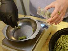 Medical marijuana is bagged at a dispensary.
