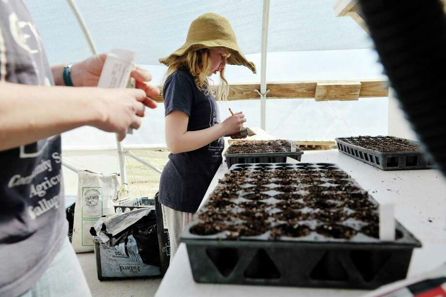 Johanna Luhrman, 9, works planting summer squash seeds with her mom, Sara inside the greenhouse on their family farm, Fox Creek Farm, on Tuesday, April 14, 2015, in Schoharie, N.Y.  Fox Creek Farm is working with the Schenectady Rescue Mission to supply fresh produce to city residents who have a difficult time getting fresh food. (Paul Buckowski / Times Union) Photo: PAUL BUCKOWSKI / 00031420A