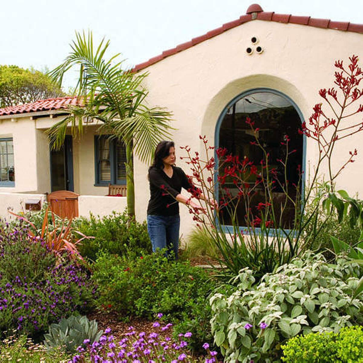 Lawnless in Ventura, CA Water-conserving gardens can be as colorful as any other. The front yard of Rick Cole, Ventura's city manager, is blooming proof. Get planting ideas from this Southern California garden