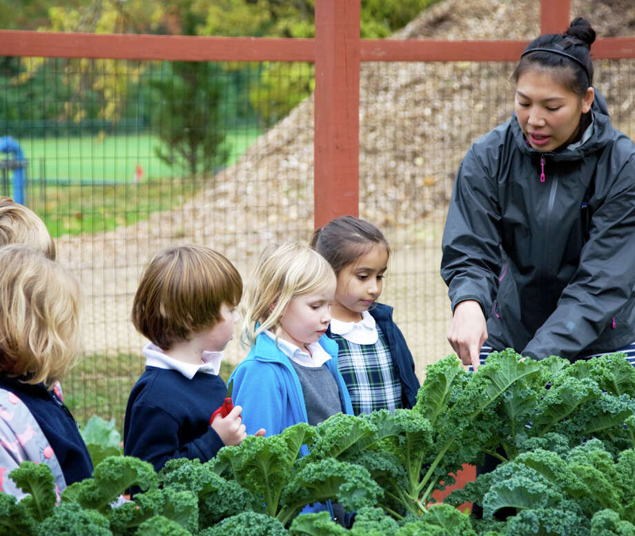 Greens Farms Academy sustainability coordinator Jackie Tran teaches Lower School students how to care for kale in the school's organic garden. Photo: Contributed Photo / Westport News
