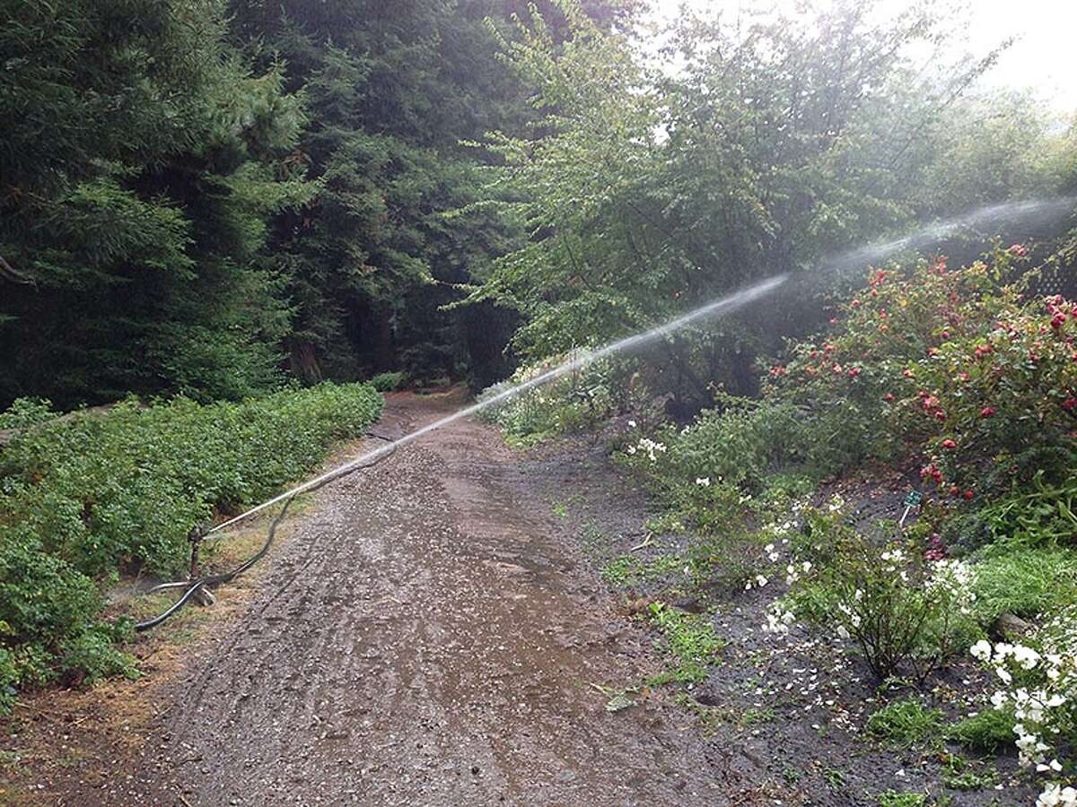 A reader took a picture of a garden (and dirt path) being watered, perhaps to the point of excess, in San Francisco's Golden Gate Park.