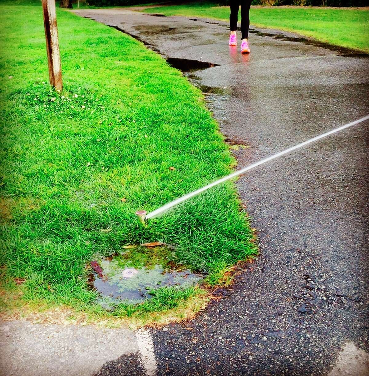 Sprinkler heads are commonly pointed in the wrong direction in San Francisco's Golden Gate Park, as this reader-submitted photo indicates.