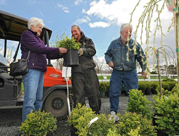 Gail Rosetti of Clifton Park hand of a Boxwood plant to employee Dennis Bryant as her husband John looks at others at Troy's Landscape Supply on Thursday, April 23, 2015 in Cohoes, N.Y. (Lori Van Buren / Times Union) Photo: Lori Van Buren