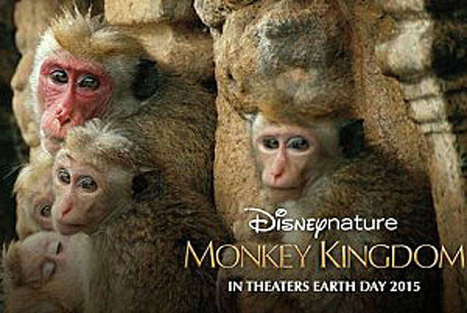 """Monkey Kingdom,"" narrated by Tina Fey, is a Disneynature documentary chronicling the lives of a community of macaque monkeys in Sri Lanka. Photo: Contributed Photo / Westport News"