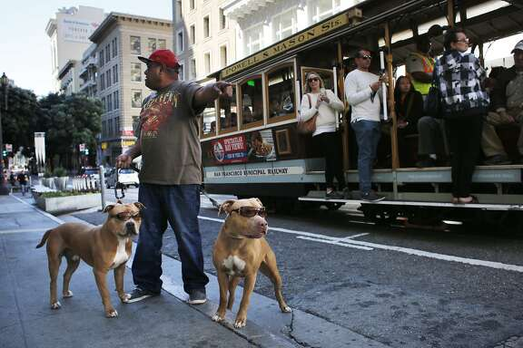 Jason Saola walks his sunglass-wearing dogs Orange Juice and Psycho up Powell Street in San Francisco, Calif.