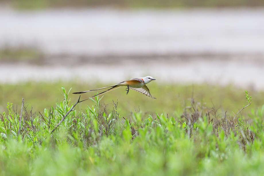 Galveston Island State Park. Photo: Kathy Adams Clark / Kathy Adams Clark/KAC Productions