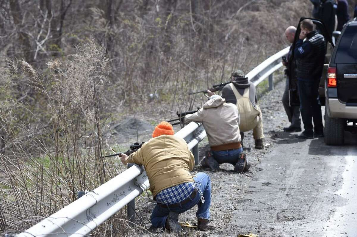 Hunters in Bethlehem prepare to shoot a herd of buffalo that escaped from a Rensselaer County farm, crossed the Hudson River, bolted across the Thruway and then gathered in a creek off of Willbrook Avenue. (Skip Dickstein / Times Union)