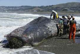 Whale on the beach at Pacifica