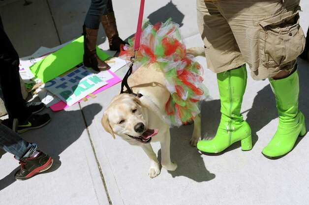 Canine friends join the fun during Walk a Mile in Her Shoes on Saturday, April 25, 2015, in Troy, N.Y. The event is a playful opportunity for men to raise their voices against sexual violence. (Cindy Schultz / Times Union) Photo: Cindy Schultz / 00031587A