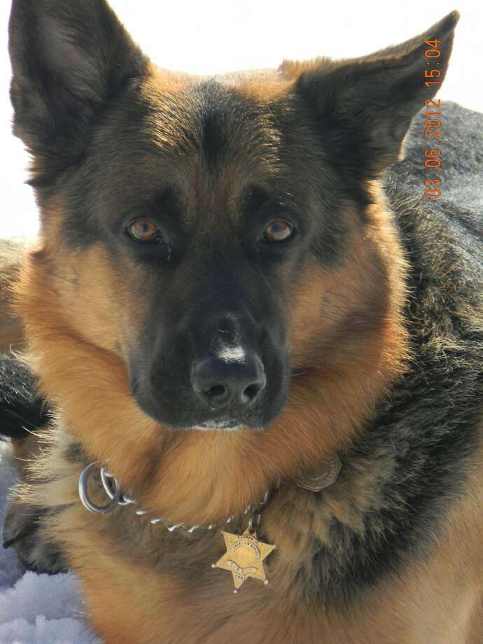 Eric, a German Sheppard, was a 6 year veteran of the Warren County Sheriff's Office.