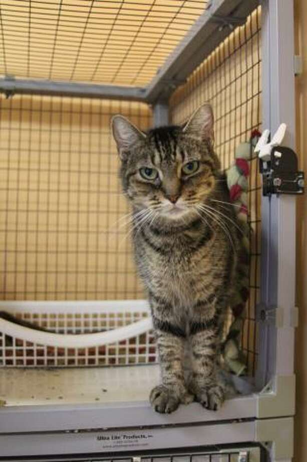 Micki is a petite and affectionate girl. (Mary Lou Baker)