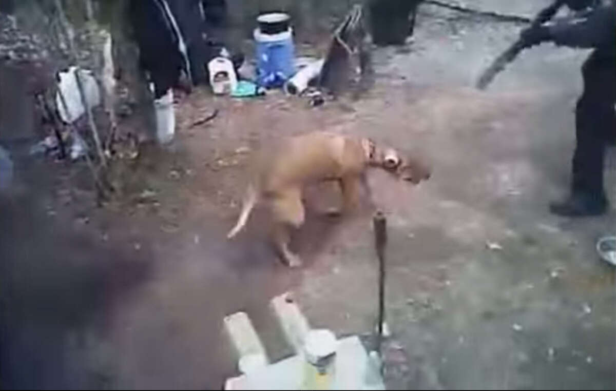 Fort Worth Police Department officers shot the dog of a local man in February 2015. Screenshot from YouTube.